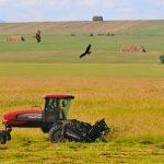 Мировое сельское хозяйство.
